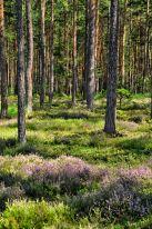 Ein Traum von einem Wald: am Hartberg