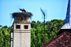 Der Storch am Pfarrhof