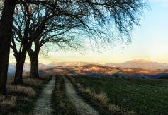3trees_151223