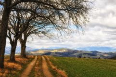 3trees_160224