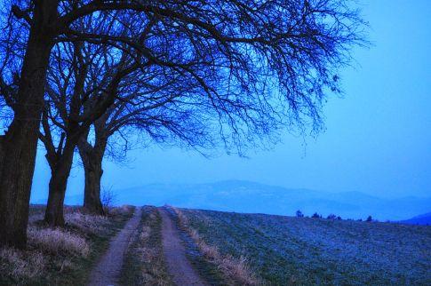 3trees_160321