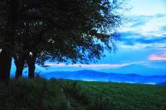 3trees_160626