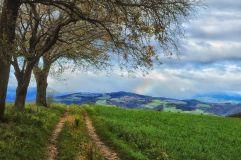 3trees_161029
