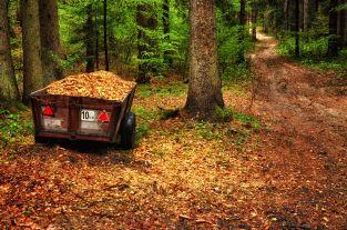 Viel Wald auf dem Weg nach Molfritz