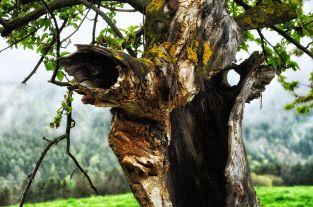 Alte Baum-Helden in Molfritz
