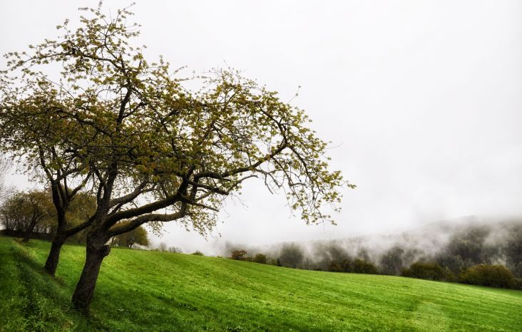 Obstbäume und Felder bei Molfritz