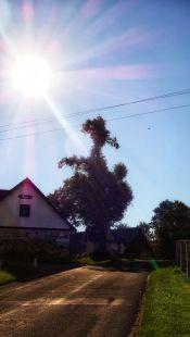 """Eine Lieblings-Wegmarke: Der """"Vogel-Baum"""" in Grub"""
