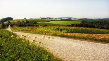 Schönheiten am Wegesrand bei Sonnberg