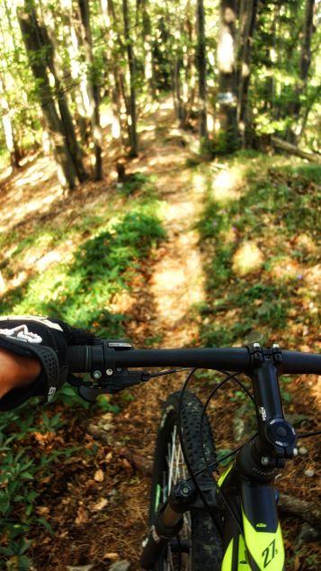 Am Single-Trail Richtung Ofenberg