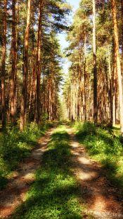 Durch den Föhrenwald