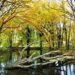 """Die pittoreske """"Baumleiche"""" im Teich"""