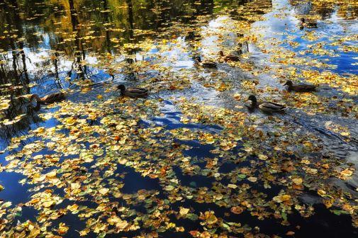 Blätter auf dem Wasserspiegel