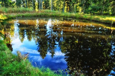 Im Spiegel des Teichs