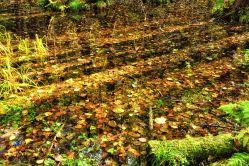 Blätter am Grunde des Sumpfs