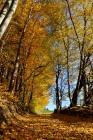 Goldener Herbst vom Feinsten