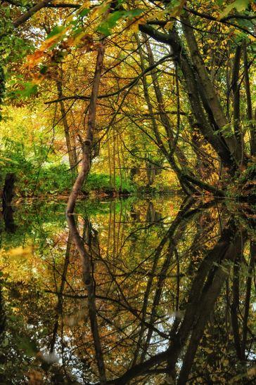 Der Herbst spiegelt sich im Teich wider