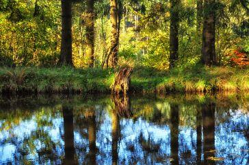 Baumstamm am Ufer