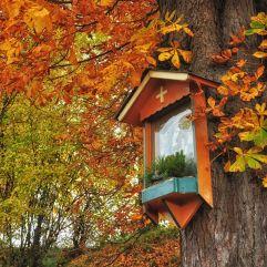Schöner Bildbaum bei Eichberg