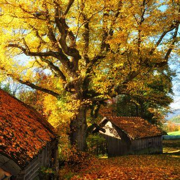 ...wcht über dem alten Bauernhof