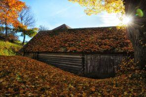 Der Stall unterm Blätter-Dach