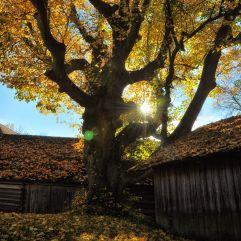 Herbstsonne über Knolln