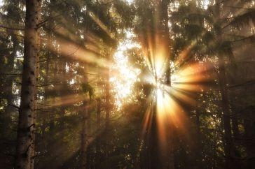 Morgensonne durchbricht den Frühnebel