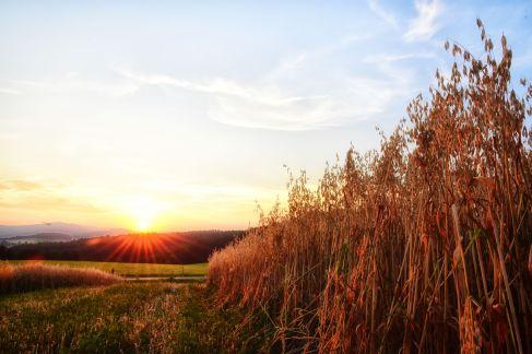 Sonnenuntergang bei Hosien