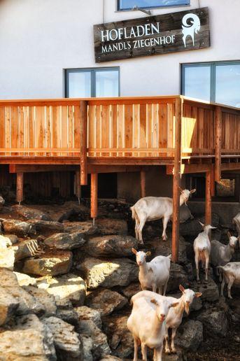 """Das """"Sonnendeck"""" über dem Ziegen-Garten"""
